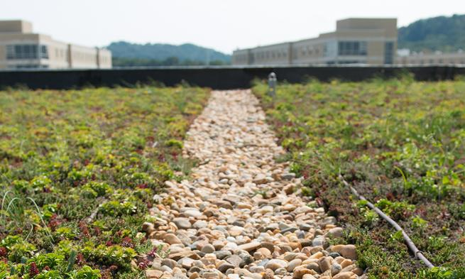 JMU green roof on East Campus