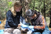 Molly Bletz assists a Malagasy veterinary student, Vatuosa Najaína, as she swabs a frog for potential probiotics in Madagascar