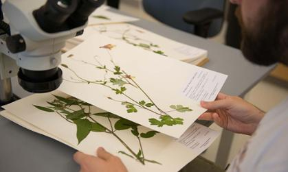 A student studies plants in JMU's Bioscience building.