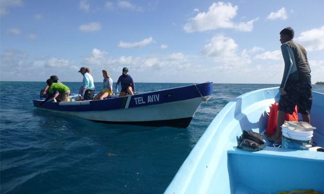Tubach Shark Conservation Belize