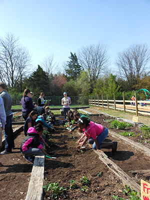 PHOTO: Students working in garden