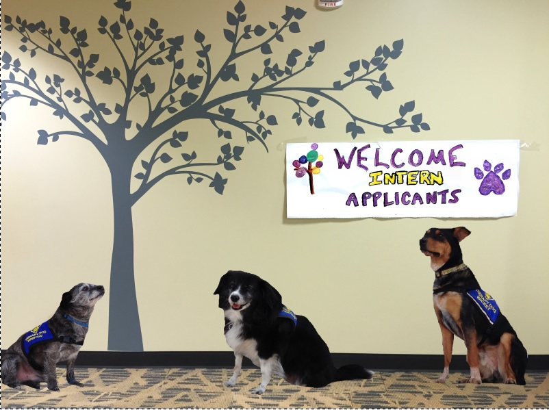 Therapy dogs with welcome sign