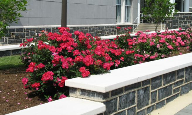 Image: Forbes Center Roses