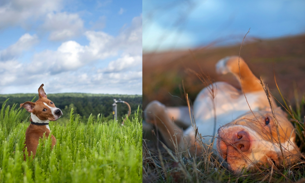 image: /_images/madisonart/prism/landfill-dogs/landfill-dogs-1000x600.jpg