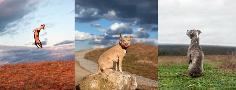 3 pictures of dogs in Landfill Park