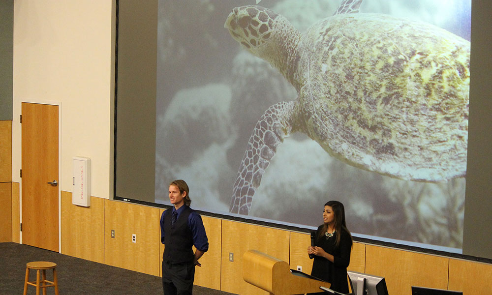 the screen shows a sea turtle while students discuss project