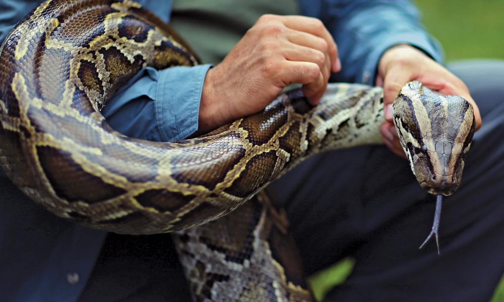 python wrapped around a man's arm, looking at the camera