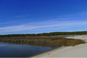 Salt marsh at Bluff Point in Northumberland County, Va.
