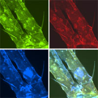 Microscopy Photo Blog