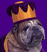 Click here to learn more about the Duke bulldog.