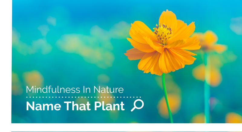 mindfulness-in-nature-identifying-plants.png