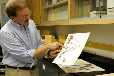 Conley McMullen shows a specimen in the herbarium.