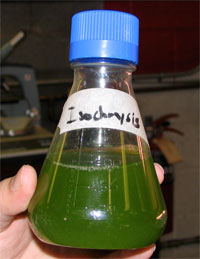 Close up of bottle containing algae in water