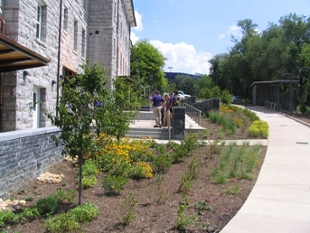 Flowers and shrubs are planted in an area that used to be a parking lot.