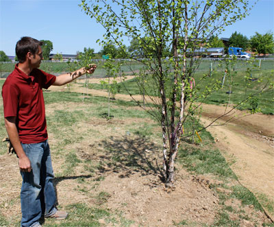 Abe Kaufman, storm water coordinator for facilities management, inspects a newly planted river birch tree on the bank of the east campus stream.